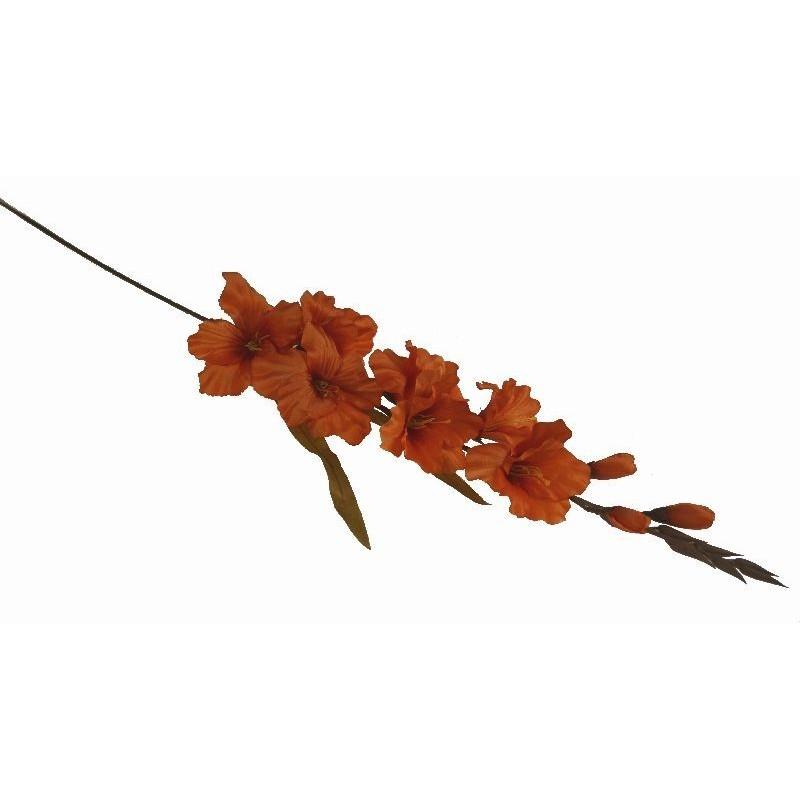 Mieczyk gladiola- pomarańczowy nasycony