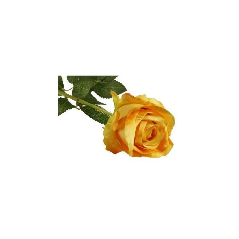 Róża długa - pomarańczowa (OR)