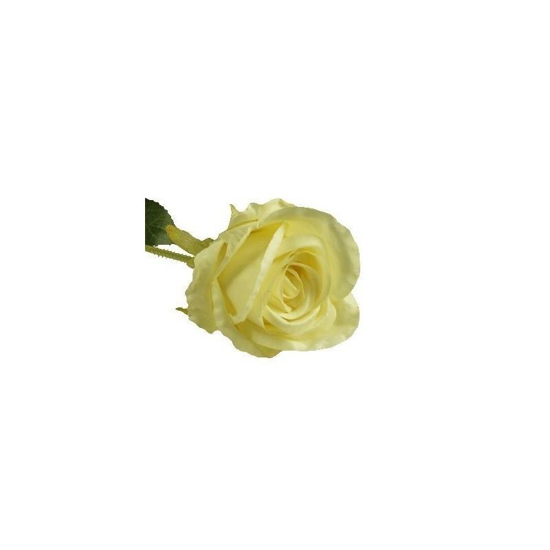 Róża długa - crema
