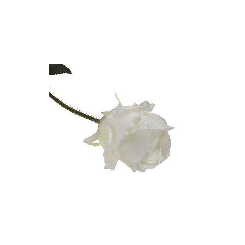 Róża długa - biała CR