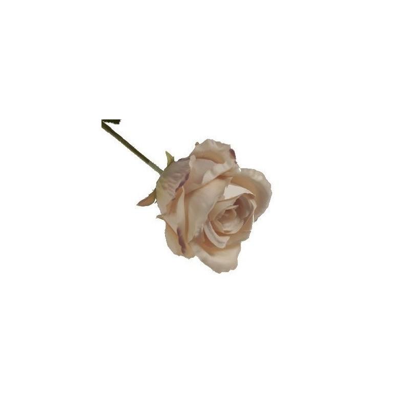 Róża długa - brzoskwiniowa Peach