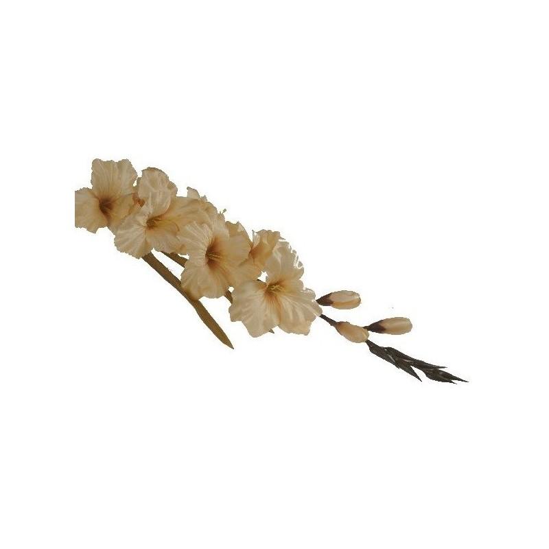 Mieczyk gladiola- kremowy ciemny