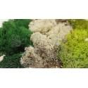 Mech chrobotek 100g  - jasna zieleń