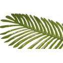 Liść Palmy