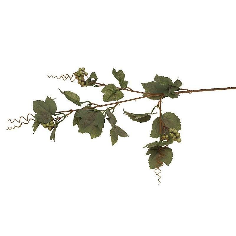 Winogrono - liście omszałe