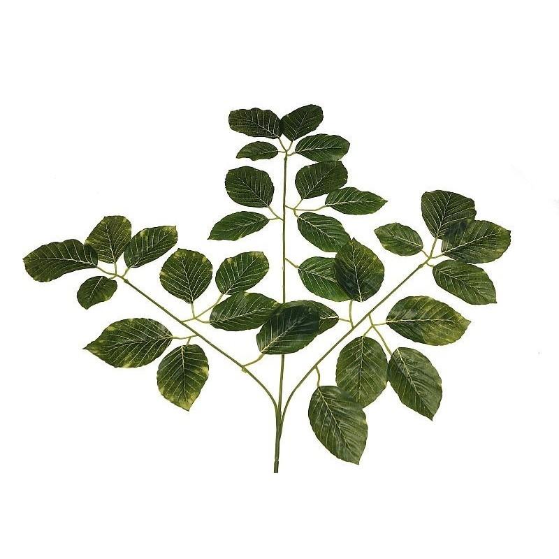Buk - liście