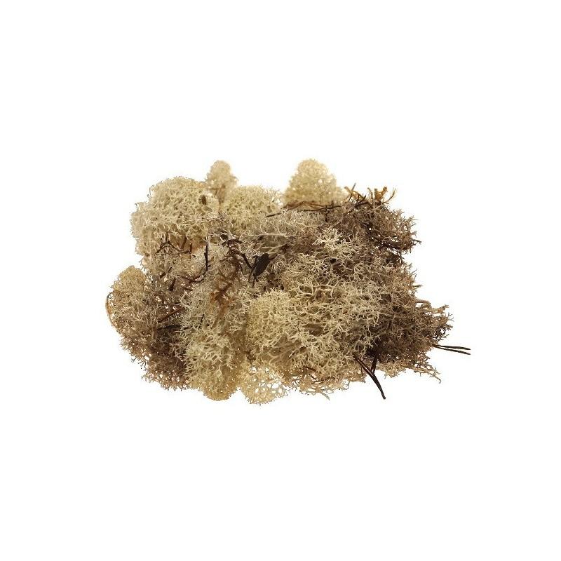 Mech chrobotek 0,5 kg - naturalny
