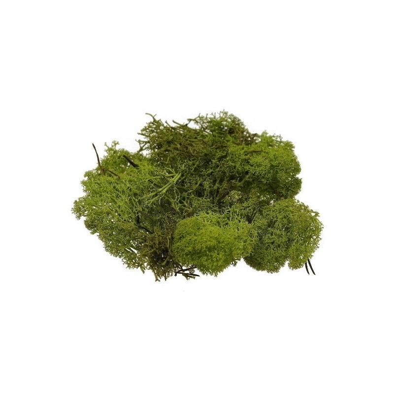 Mech chrobotek 0,5 kg  - ciemna zieleń