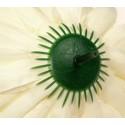 Chryzantema pomarańczowa - kwiat wyrobowy