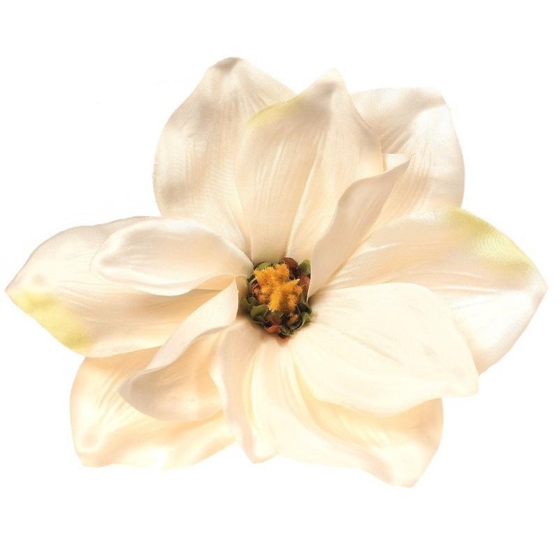 Magnolia biała - kwiat wyrobowy