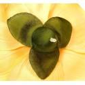 Magnolia ekri - kwiat wyrobowy