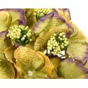 Hortensja zielono-fioletowa - kwiat wyrobowy