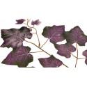 Winogrono fioletowe - liście 12 szt / op.