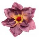 Magnolia fioletowa - kwiat wyrobowy