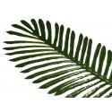 Ciemny liść Palmy (12 szt.)