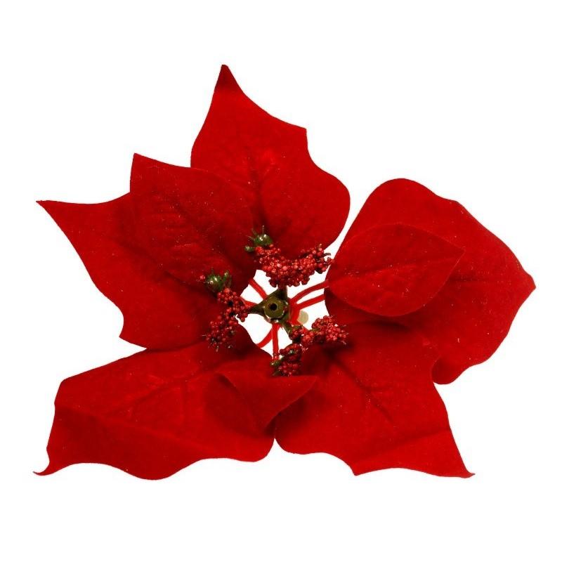Gwiazda betlejemska - czerwona