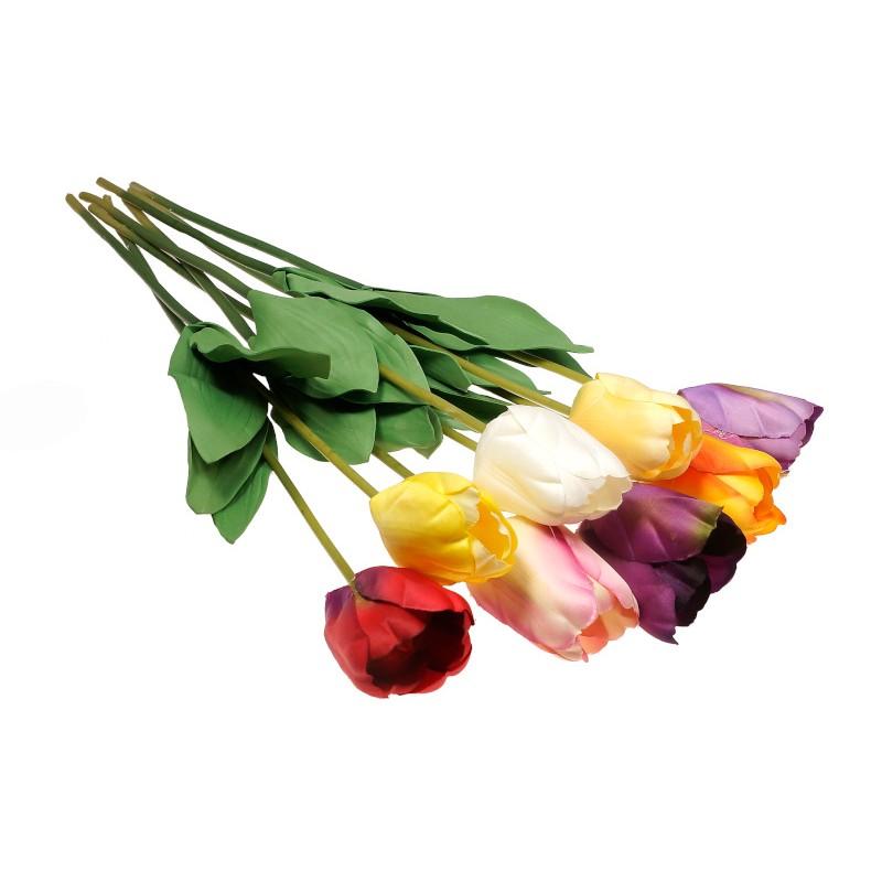 Duże tulipany op./24 szt.