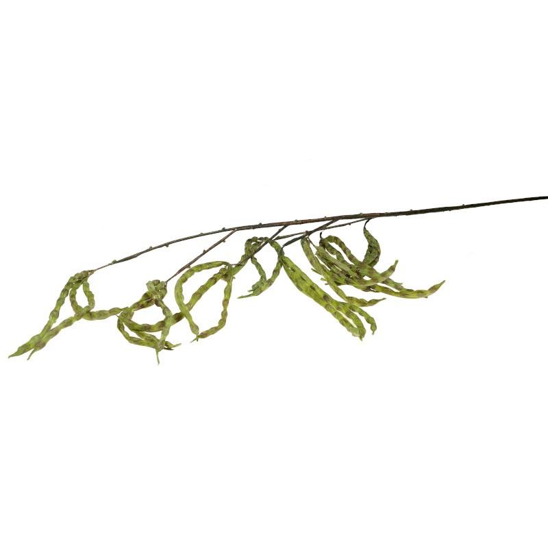 Gałązka fasoli
