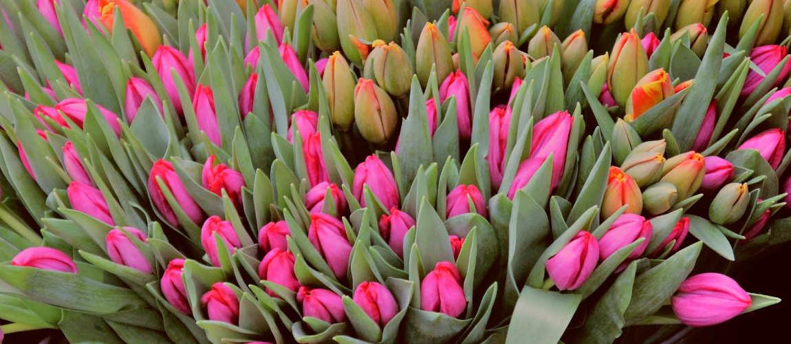 Kryzys w kwiaciarniach przez epidemię koronawirusa