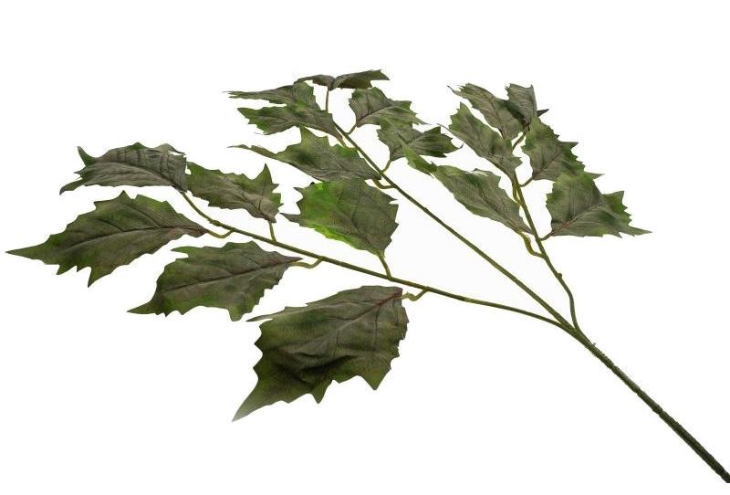 liście jaworu