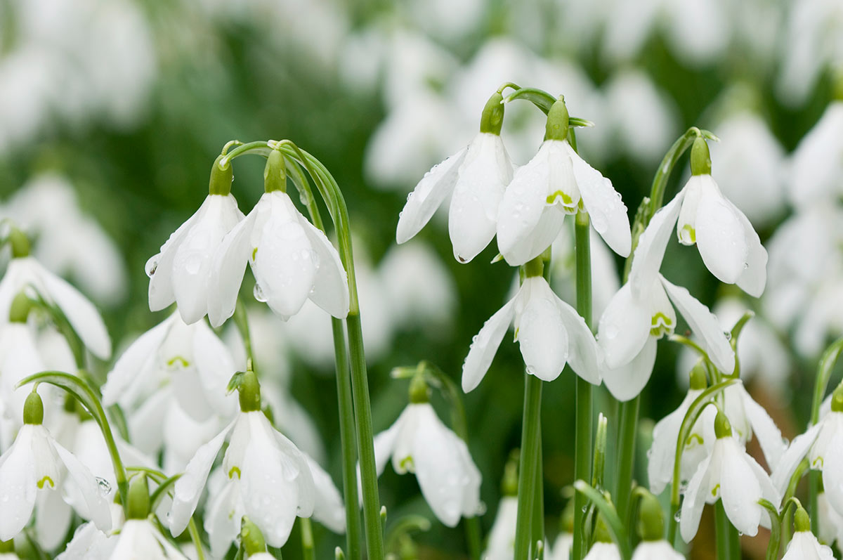 Wiosenne Kwiaty Hurtownia Florystyczna